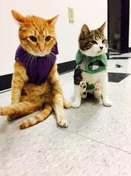 Two paralyzed cats, Jesse and Willie