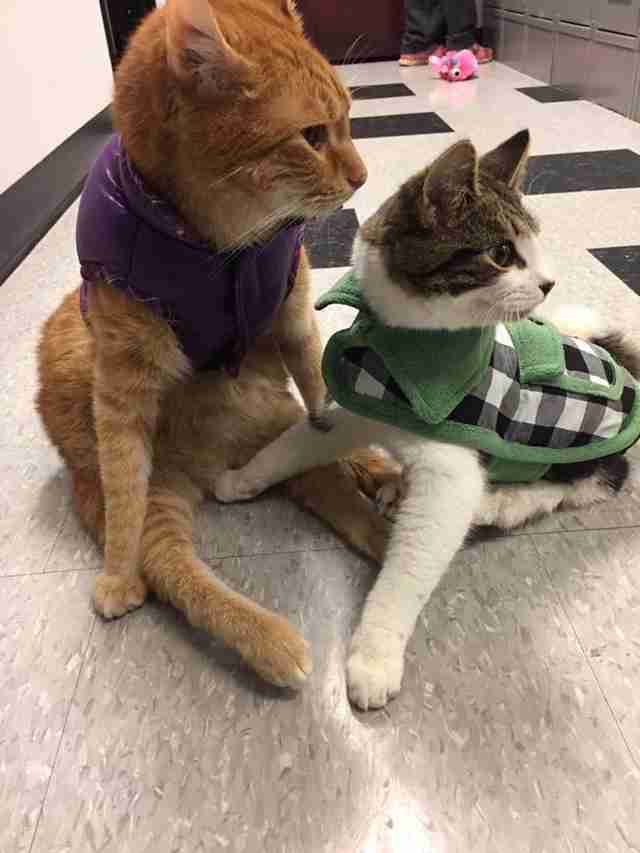 Jesse and Willie, two paralyzed cats