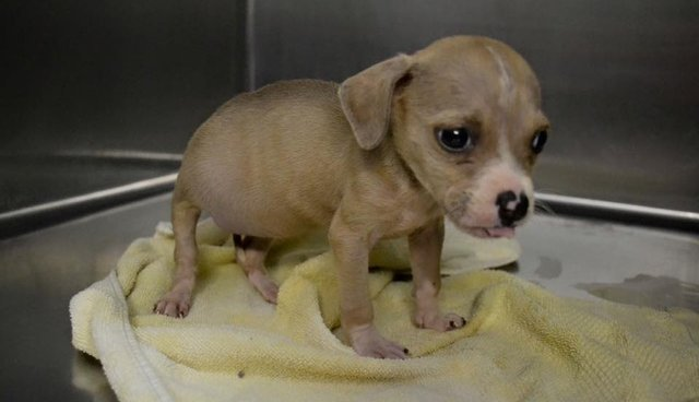 Miracle Puppy Survives One Of Worst Injuries Shelter Has Seen