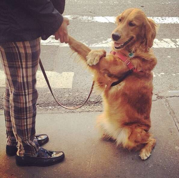 Loubie when she started holding hands with her owner