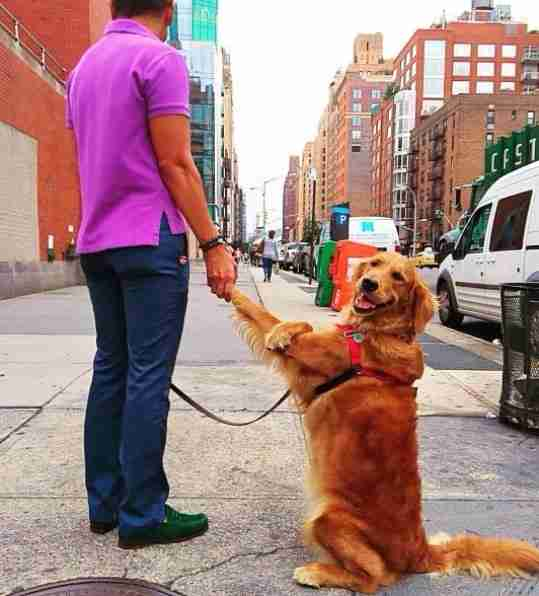 Loubie holding hands with her owner in NYC
