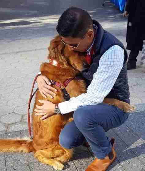 Golden retriever dog giving a hug in New York City