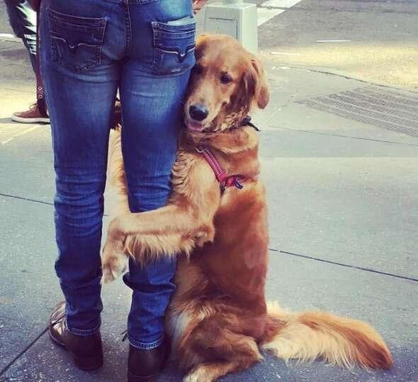 Loubie the hugging dog