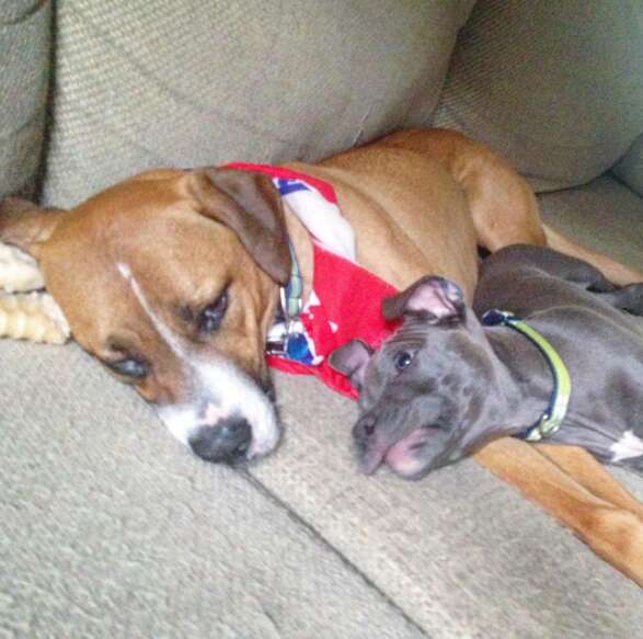 anxious dog gets a brother who helps him