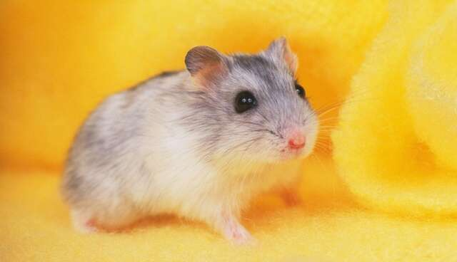 5 Things Your Hamster Wants You To Know About What It's Like