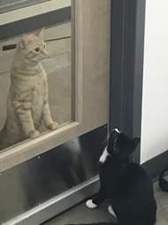 cat comforts patients at vet office