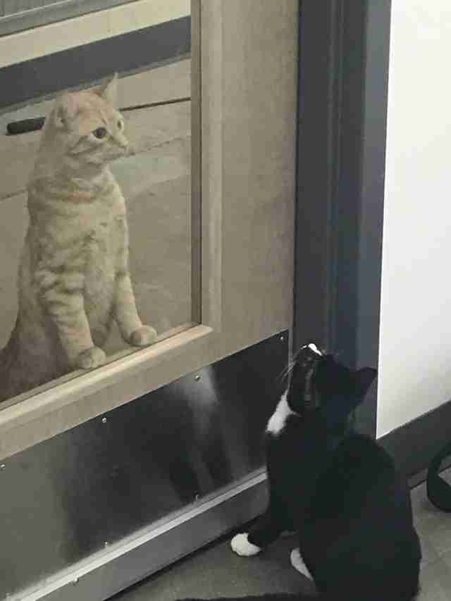 cat comforts patients at vet office