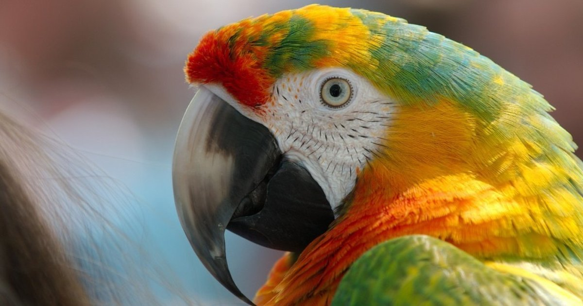 Parrots Are Not Pets: 8 Things I Learned from Watching