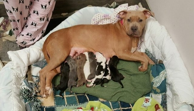 Shelter Dog Adopts Her Best Friend's Puppies After She Passes Away