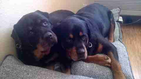 Heartbreaking Video Shows Dog Mourning The Death Of His Brother