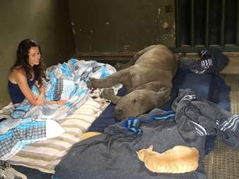 Caretaker watches over napping orphaned rhino and her rescue cat
