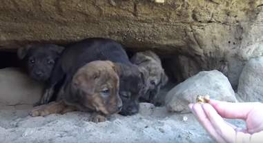 man crawls into tiny cave to save abandoned puppies