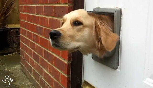 Watch Dogs Using Cat Doors The Dodo