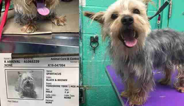 He Gives Shelter Dogs Free Haircuts So They Ll Get Homes The Dodo