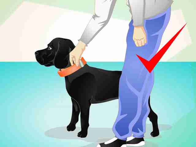 Image result for How to Use a Dog Training Collar as a Pro Dog Trainer