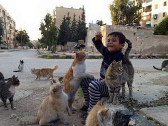 Aleppo, Syria cat sanctuary before bombing