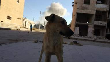 Dog in Aleppo with bomb smoke in distance