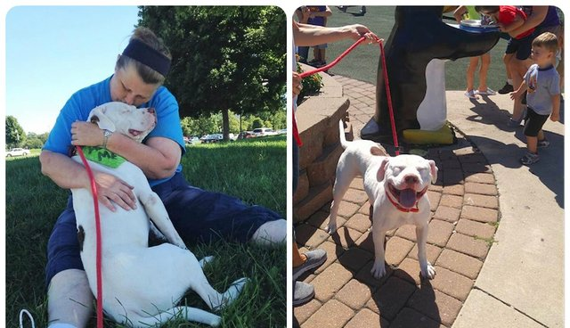Dog Abandoned In Yard Goes On Day Trip And Can't Stop Smiling