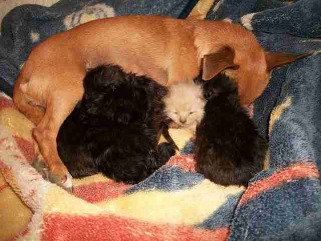 Dog Never Thought She'd Be A Mom Again, Until She Met 5 Kittens