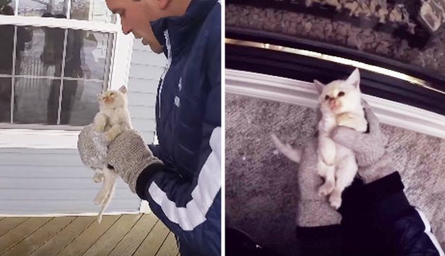 Family Finds A Frozen Kitten, Then Brings Him Back To Life