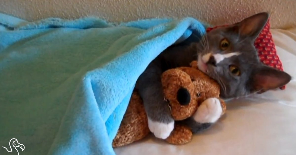 WATCH: Cats Hugging Toys - The Dodo