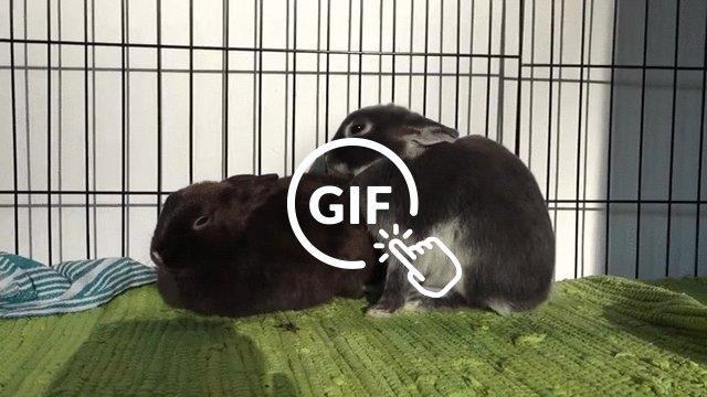 Friend Flop
