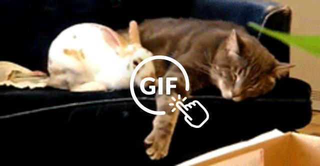 Cat Flop