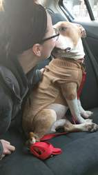 Russ enjoying a car ride with his new mom, Kayla