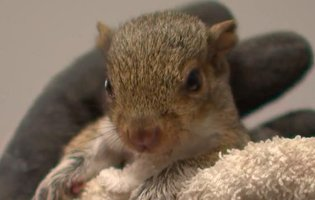 Squirrel baby lost - photo#15