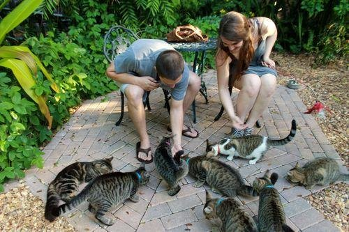 Hemingway's House Is Chock Full Of Six-Toed Cats - The Dodo