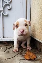 puppy on doorstep