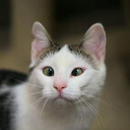cross-eyed cat
