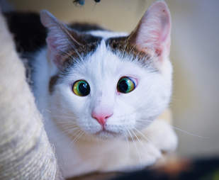 cross-eyed rescue cat