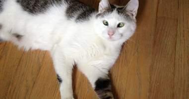 cross-eyed foster cat