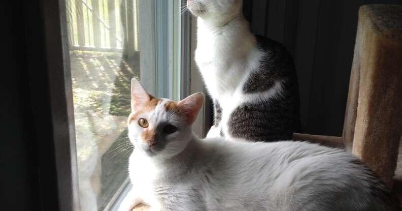 cross-eyed cat with best friend