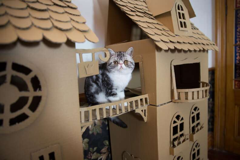 woman builds palace for her cat