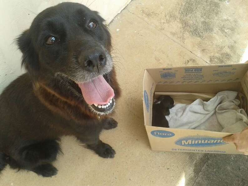 dog looks over puppy rescued from trash bag
