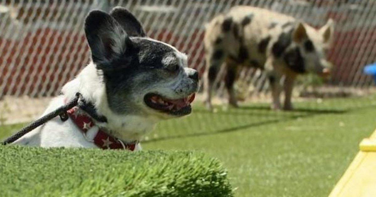 Cesar Millan Dog Training San Diego