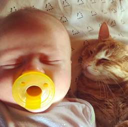 cat protects baby while he has a fever
