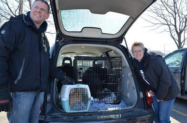 Pig and cat friends being transported to their new home