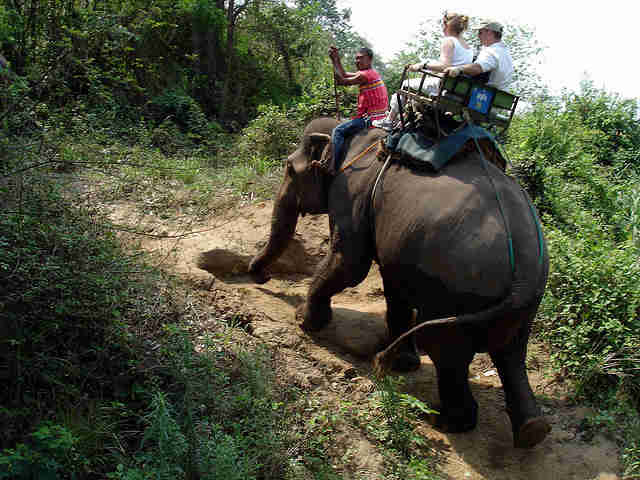 'Overworked' Elephant Collapses And Dies Under Tourists' Weight