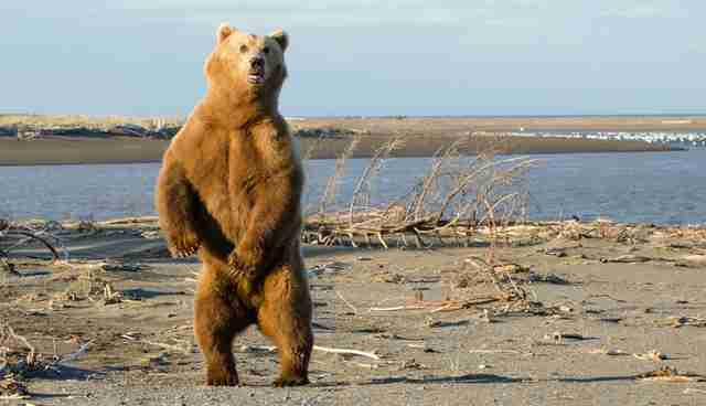 0d8d041f63 What You Should ACTUALLY Do If You See A Bear - The Dodo