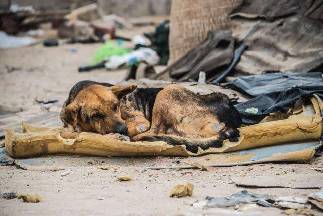 Dog living on a trash pile in Mexico