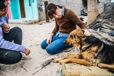 People helping a street dog in Mexico