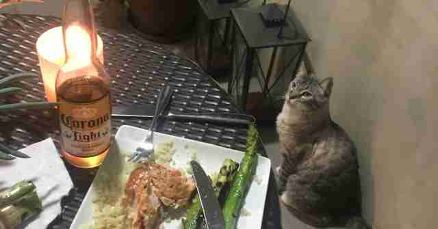 cat watches family eat