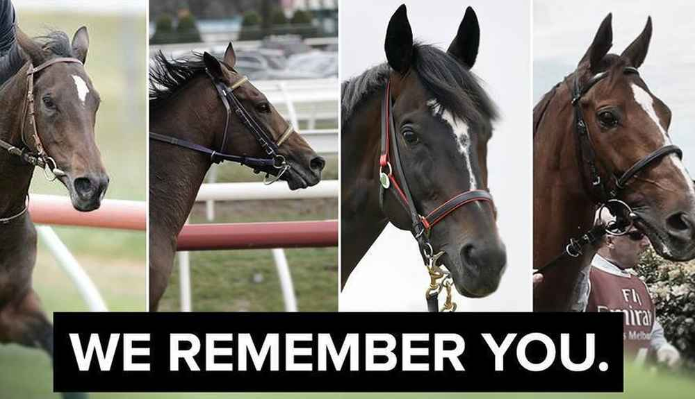 These Horses All Died On The Same Racetrack - The Dodo