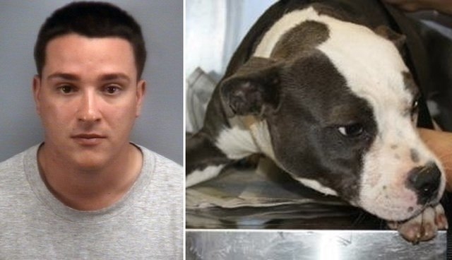Man Admits To Adopting Dog Off Craigslist Burning Her Alive The Dodo