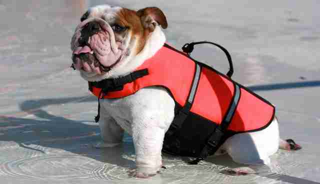 don t worry about googling dogs in life vests because we did it
