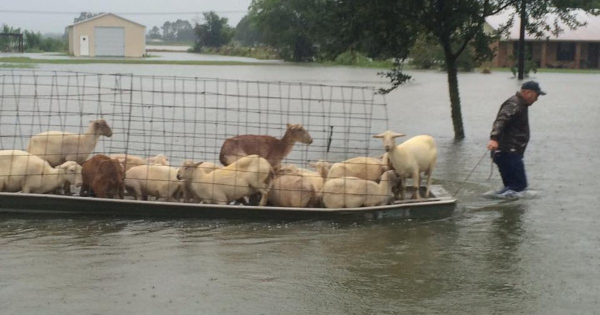 Dog Rescues In Mississippi
