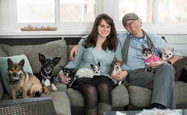 chihuahuas with family on couch
